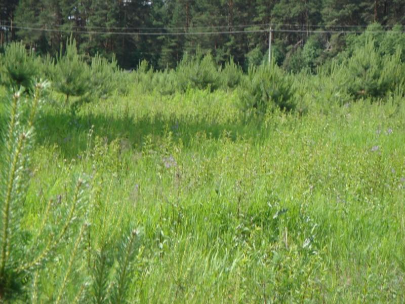 Продам участок по адресу Россия, Тверская область, Калининский район, Князево фото 3 по выгодной цене
