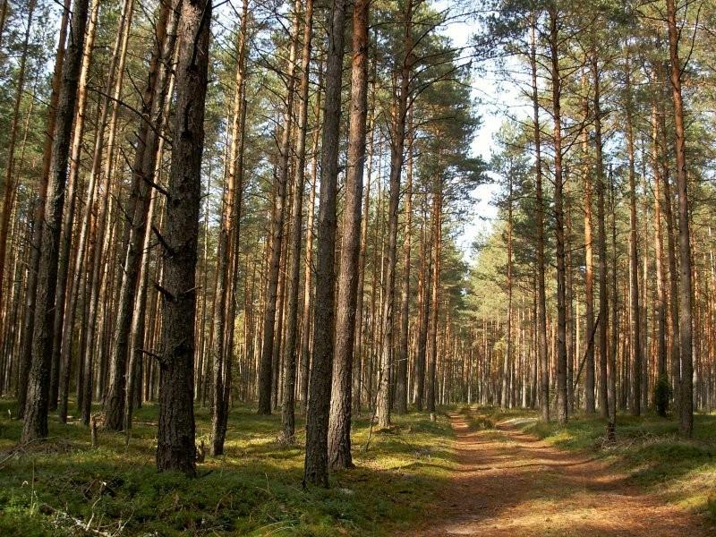 Продам участок по адресу Россия, Тверская область, Калининский район, Длинки фото 9 по выгодной цене