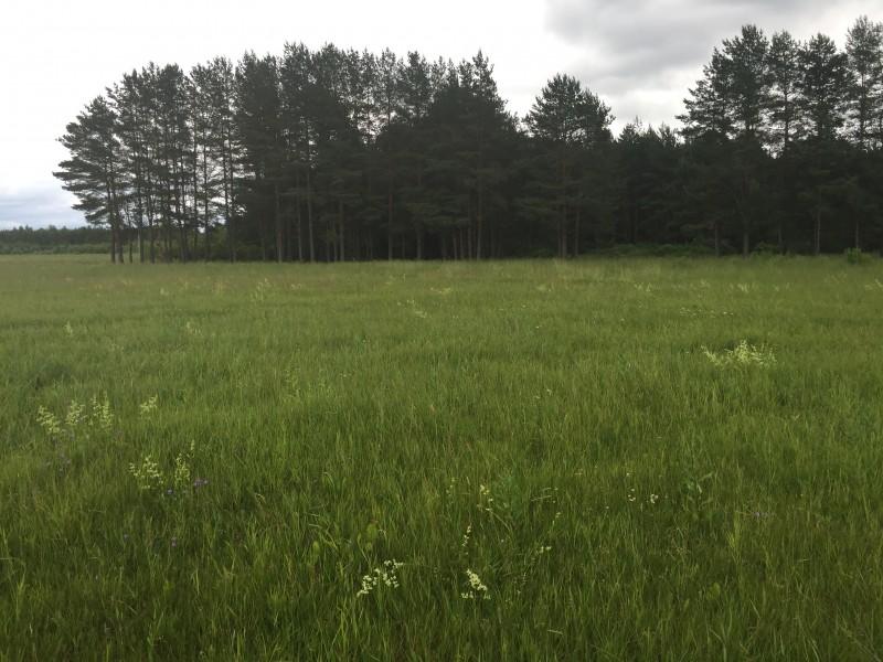 Продам участок по адресу Россия, Тверская область, Калининский район, Черногубово фото 1 по выгодной цене