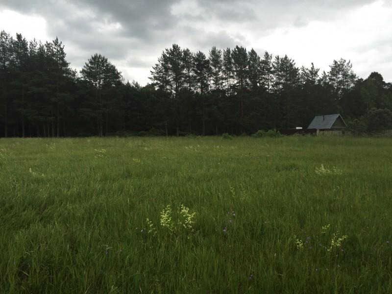 Продам участок по адресу Россия, Тверская область, Калининский район, Черногубово фото 2 по выгодной цене